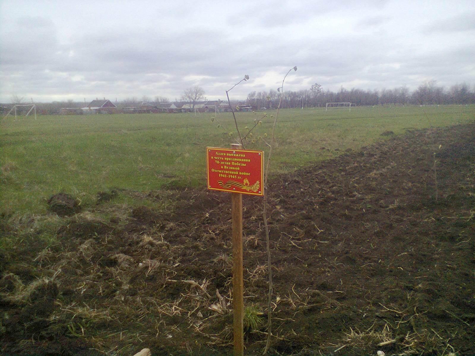 В Ловлинском сельском поселении Тбилисского района посадили около 100 саженцев липы