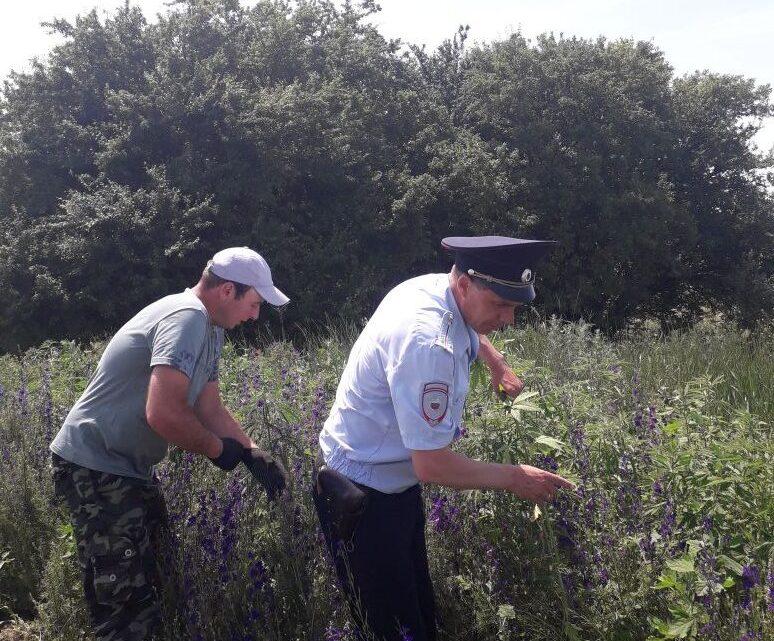 В Ловлинском сельском поселении проводит свою работу комиссия по мониторингу наркосодержащей растительности.