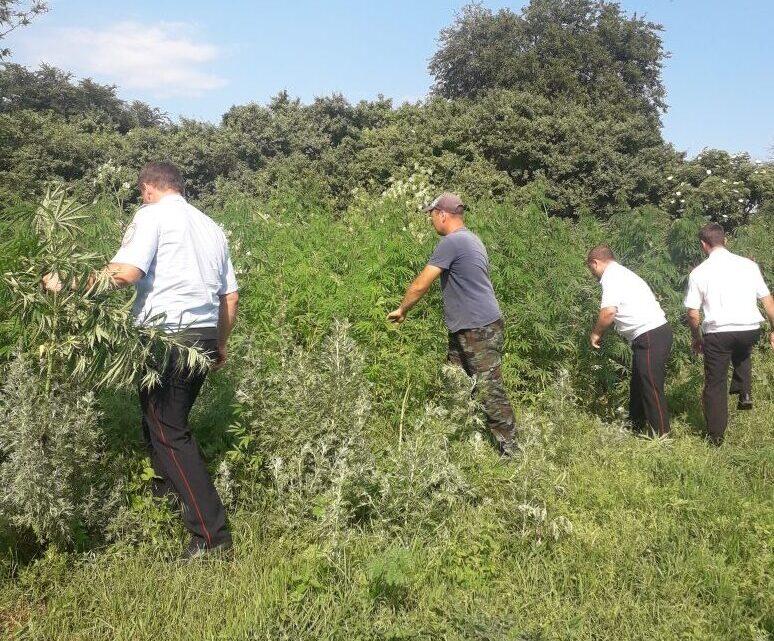 В Ловлинском сельском поселении проводит свою работу комиссия по мониторингу наркосодержащей растительности